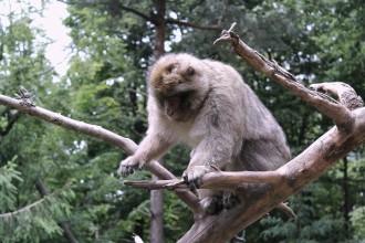 Voyages-et-compagnie.com - Blog voyage | Montage des singes Vosges Alsace