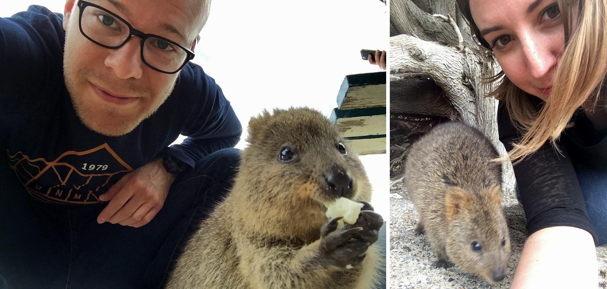 Voyages-et-compagnie.com - Blog voyage | Rottnest Island, le Paradis du Quokka / Selfie #selfiequokka